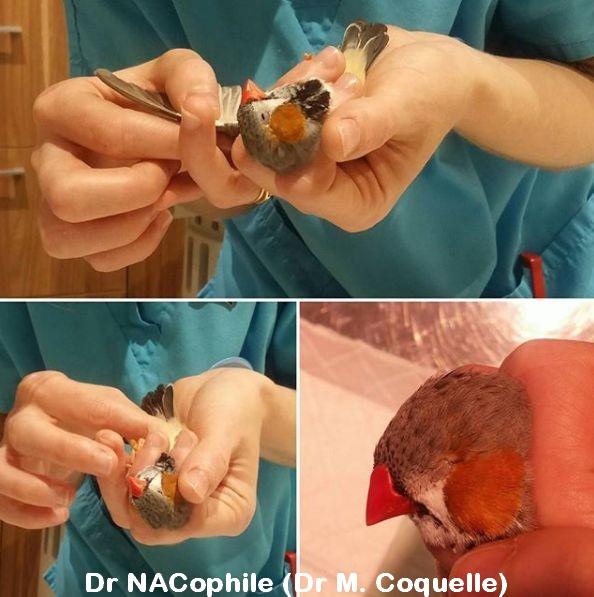 Examen clinique d'un diamant mandarin