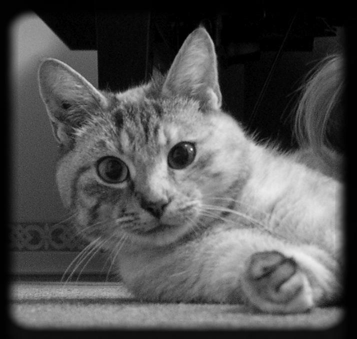 Mon premier chat, Aglaée