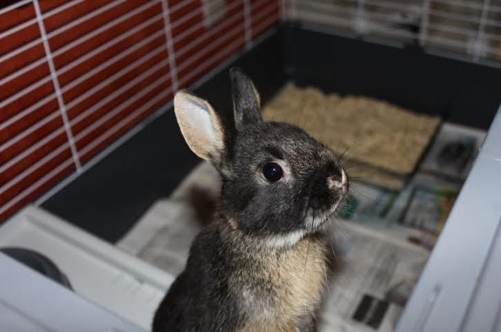 Visite d'adoption pour le craquant Granit