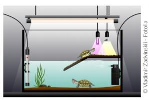 Aquarium exemple recommandation vétérinaire NAC véto Paris
