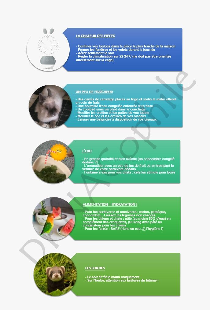 Canicule vétérinaire NAC spécialiste Paris lapin furet perroquet reptile chaleur 2019 conseils vétérinaires