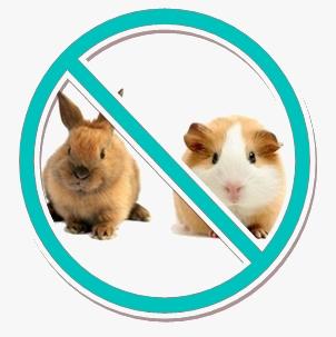 Cobaye lapin interdit