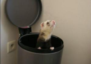 Mettre son animal à la poubelle