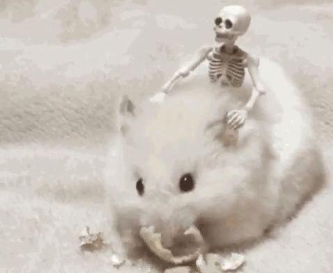 Halloween hamster