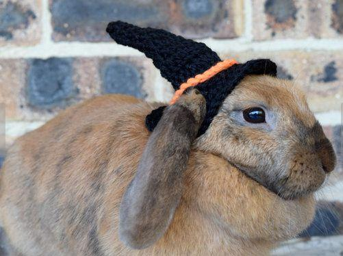 Halloween lapin chapeau