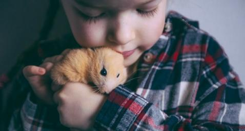 Hamster wamiz enfant