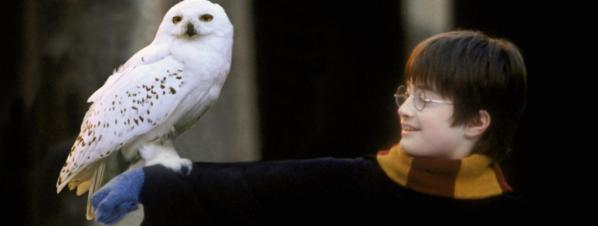 Hedwige harry potter chouette