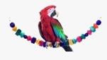 Jouet perroquet