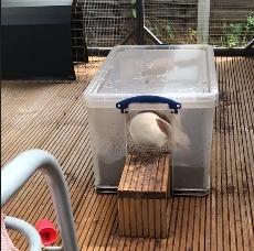 Lapin boite a gratter bac terre enrichissement balcon amenager DIY fait maison