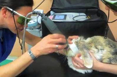 Lapin lasertherapie