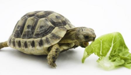 Nutrition reptile