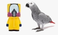 Oiseau quarantaine 1