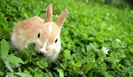 Phytotherapie nac lapin cochon dinde furet dr coquelle nacophile veterinaire nac paris