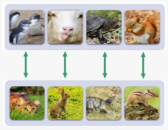 régulation espèces niches écologiques exemples dr nacophile drnacophile dr coquelle