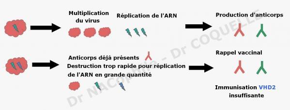 Probleme vaccination nobivac myxo plus