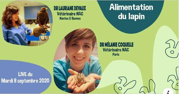Rabbit world live nutrition dr coquelle devaux dr nacophile