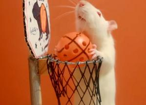 Rat basket