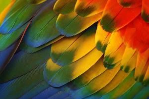 Tableau decoration plumes perroquet
