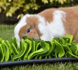 Tapis fouille lapin dr nacophile drnacophile veterinaire recommandation enrichissement