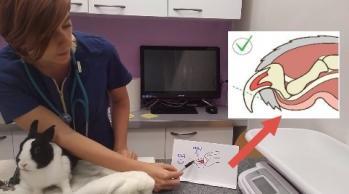 Tuto griffe 3 dr NACophile tuto tutoNAC tutoriel vidéo lapin coupe griffe vétérinaire NAC Paris spécialiste