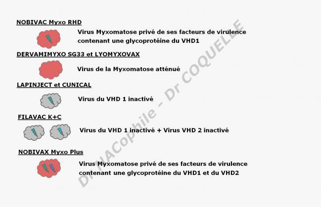 Vaccins lapin principe dr coquelle drnacophile