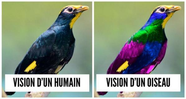 Vision oiseau