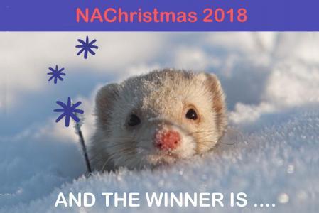 Winner nachristmas
